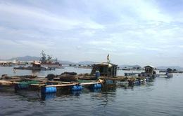 Báo cáo nguyên nhân cá chết ở Thanh Hóa trước ngày 20/9