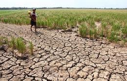 Đồng bằng sông Cửu Long ứng phó với tác động của biến đổi khí hậu