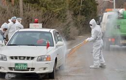 Hàn Quốc tiêu hủy 4 triệu con gia cầm, ngăn dịch cúm lan rộng