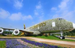 Dùng 5 triệu bông hoa tạo hình máy bay Airbus A380