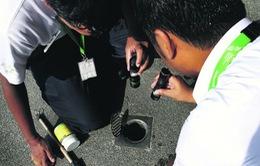 Singapore phạt nặng nếu hộ gia đình để... bọ gậy, loăng quăng phát triển
