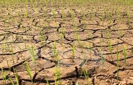 Hạn hán năm 2016 sẽ khốc liệt hơn 2015
