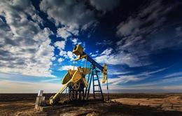 Nga chuẩn bị tham gia kế hoạch đóng băng sản lượng dầu mỏ
