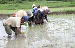 Kết thúc đợt 1 lấy nước: 50% diện tích đã đủ nước gieo cấy vụ Đông Xuân