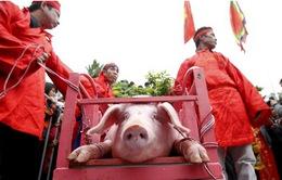 Làng Ném Thượng tổ chức tục chém lợn trong nhà sạp