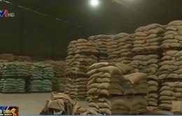 Doanh nghiệp xuất khẩu cà phê than khó vì không vay được ngoại tệ