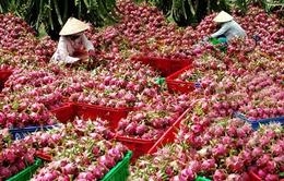 Doanh nghiệp mong muốn xuất khẩu nông sản chính ngạch sang Trung Quốc