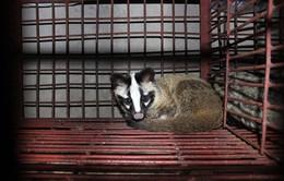 Cận cảnh mua bán động vật hoang dã ở Thủ đô