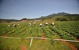 Hợp tác xã kiểu mới - Giải pháp nâng cao thu nhập cho người nông dân
