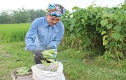 Phát huy hiệu quả chuỗi liên kết trong sản xuất nông nghiệp (17h20, 28/10, VTV1)