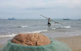 Ruốc biển tại Quảng Bình an toàn