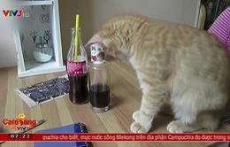 Quán cà phê mèo độc đáo tại Cộng hòa Czech