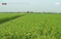 Thái Bình phát huy hiệu quả chuỗi liên kết trong sản xuất nông nghiệp