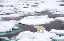 Băng tan kỷ lục ở Greenland
