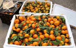 Quảng Ninh: Thu giữ 2,8 tấn thực phẩm không rõ nguồn gốc
