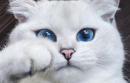 Chiêm ngưỡng những chú mèo đẹp nhất thế giới