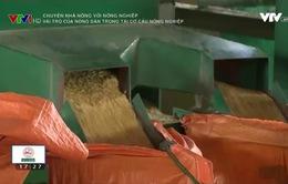 Nông dân Nam Định đóng góp tích cực trong tái cơ cấu ngành nông nghiệp