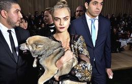 Cara Delevingne đưa cún đi xem thời trang