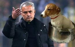 """CĐV Man Utd dọa """"xử tử"""" cún cưng nếu Mourinho không bị sa thải"""