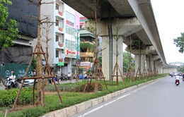 Hà Nội trồng cây dưới đường sắt trên cao: Có thực sự hợp lý?