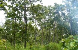 Gần 20.000 tỷ đồng khôi phục rừng Tây Nguyên