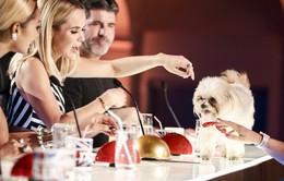Những chú chó nổi danh đến khó tin nhờ cuộc thi Got Talent