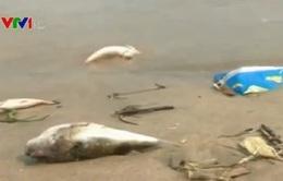 Nghiêm túc thực hiện hỗ trợ người dân bị ảnh hưởng do hải sản chết bất thường