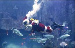 Đặc biệt ong già Noel phiên bản người cá tại Thủy cung Paris
