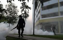 Số ca nhiễm virus Zika tại Singapore tăng lên 215 người