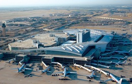 Mỹ: Lợn làm... nhân viên sân bay