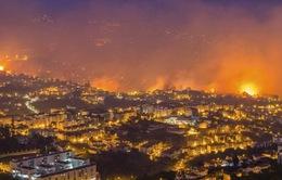 Cháy rừng dữ dội ở Bồ Đào Nha, 4 người thiệt mạng