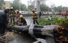 Ấn Độ: Hàng nghìn người đi sơ tán tránh bão Vardah