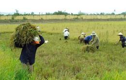 Mở rộng đối tượng miễn thuế sử dụng đất nông nghiệp