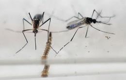 Việt Nam chính thức vào cuộc chiến chống virus Zika