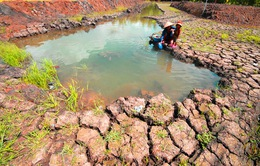 Toàn bộ 13/13 tỉnh, thành ĐBSCL bị nước mặn xâm nhập