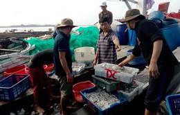 Quảng Trị: Sản lượng đánh bắt hải sản ở Cửa Việt tăng mạnh