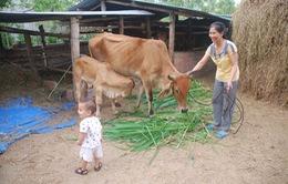 Lai Châu: Nhiều gia đình xin ra khỏi diện hộ nghèo
