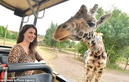 Một số sự thật kỳ lạ về vườn thú
