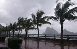 Huyện Cần Giờ tích cực triển khai công tác phòng chống thiên tai trước áp thấp nhiệt đới