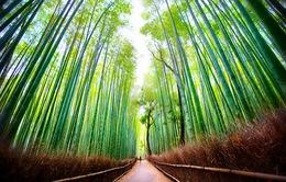 Ngất ngây với những điểm chụp ảnh đẹp nhất Nhật Bản