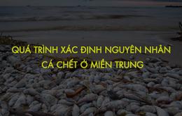 [INFOGRAPHIC] Quá trình xác định nguyên nhân cá chết ở miền Trung