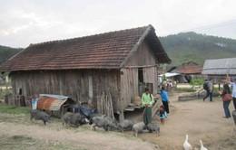 Kon Tum: 12 dự án hỗ trợ người nghèo phát triển sản xuất