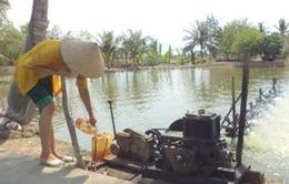Thiếu điện nuôi tôm tại Bạc Liêu: Do địa phương không phải vùng nuôi quy hoạch