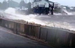 Bão nhiệt đới Hermine gây mưa lớn tại Mỹ