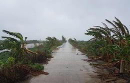 Giảm thiểu nhiều thiệt hại của bão số 3 nhờ chủ động ứng phó