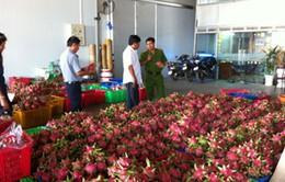 Bắt quả tang cơ sở thu mua thanh long sử dụng hóa chất tại Bình Thuận