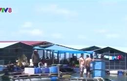 Phú Yên: Mặc lệnh tháo dỡ, bè nổi tạm bợ vẫn mọc lên