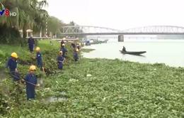 """Bèo tây """"tấn công"""" sông Hương"""