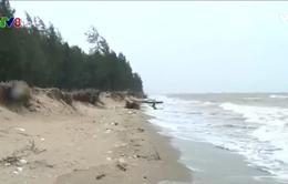 Hàng trăm hộ dân Thanh Hóa bị ảnh hưởng do xâm thực biển