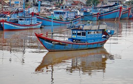 Đã cứu được 8 thuyền viên bị chìm tàu trên biển Vũng Tàu
